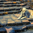 Stock Photo: Dog sit on stone stair6