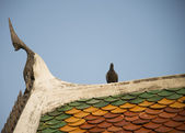 Gable apex on roof Temple with pigeon2 — Stock Photo