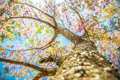 Under branch of pink cherry tree4 — Stock Photo