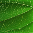 Green leaf texture — Stock Vector