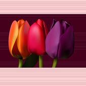 Tulips — Stock Vector