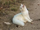 A curious cat — Stock Photo