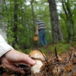 mushroom picking — Stock Photo