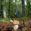 Mushrooming — Stock Photo
