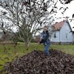 Raking leaves in the garden — Stock Photo