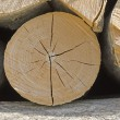 Stock Photo: Wood is ready for winter