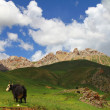 Alpine pasture - Stock Photo