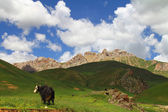 Alpine pasture — Stock Photo