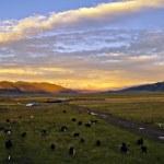 Pasture the sunset — Stock Photo