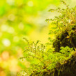 Closeup green moss — 图库照片