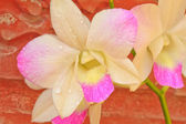 Pink orchid flowers. — Stock Photo