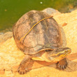 Turtle — Stock Photo #28340007