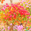 Bougainvillea — Stock Photo #28629247