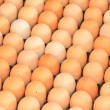 Eggs — Stock Photo