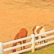 Horse farm — Stock Photo #28631865
