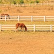 Horse farm — Stock Photo #28632745