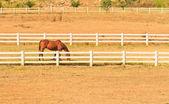 Horse farm — Stock Photo