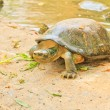 Turtle — Stock Photo #28842425