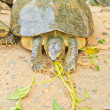 Turtle — Stock Photo #28842551