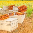 Stock Photo: Bees and honeycom
