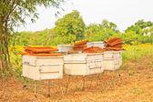 Bees and honeycom — Stock Photo