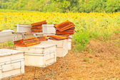Bees and honeycom — Stock Photo