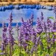 Stock Photo: Violet colour flowe
