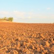 Plowed Field — Foto Stock