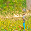 Sprinkler — Stock Photo