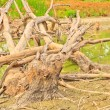 Stock Photo: Dead trees