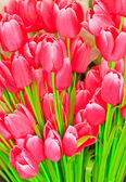 Artificial pink tulip — Stock Photo