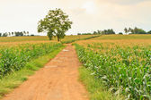 Crops and trees — Foto Stock