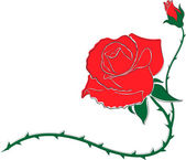 Red roza — Vector de stock