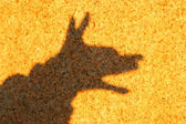 Young child forming a coyote with hand shadow on rock. — Stock Photo