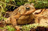 Toad. — Stock Photo