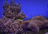 Coral reef — Stock Photo