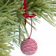 Red and white christmas ball on the pine branch — Stok fotoğraf