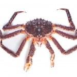 Raw kamchatka crab isolated on white background — Stock Photo #14896351