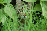Cat hiding behind leaves — Stock Photo