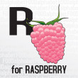 R for raspberry, the food alphabet — Stock Vector