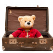 Bear in suitcase — Stock Photo