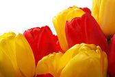 красные и желтые тюльпаны — Стоковое фото