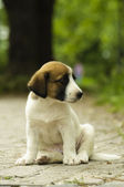 Little puppy sitting in the park — Stock Photo