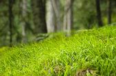 Fine green grass — Stockfoto