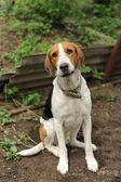 Un perro manchado — Foto de Stock