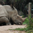 Rhino rest — Stock Photo #12625783