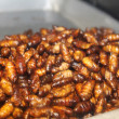Larvae fried — Stock Photo