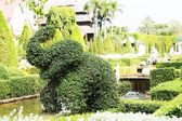 Elephant- Bush — Stock Photo