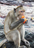 Monkey eats fruits — Stock Photo