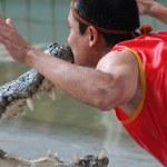 The kiss with crocodile — Stock Photo